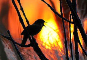 Пел на закате соловей